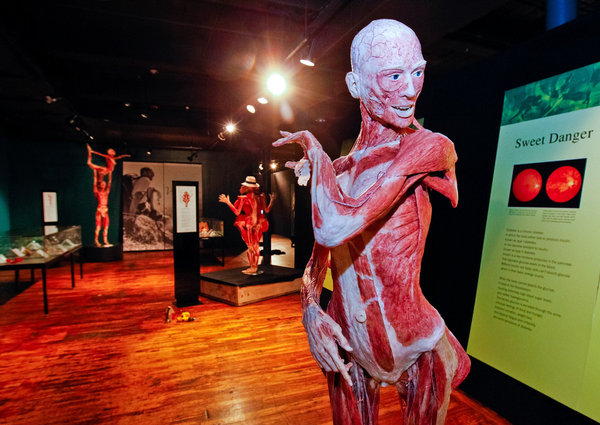 The Body Worlds Vital Exhibit