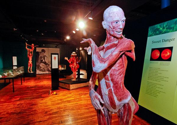 The Body Worlds Vital Exhibit