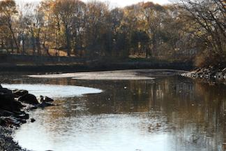 Ipswich River in Danger