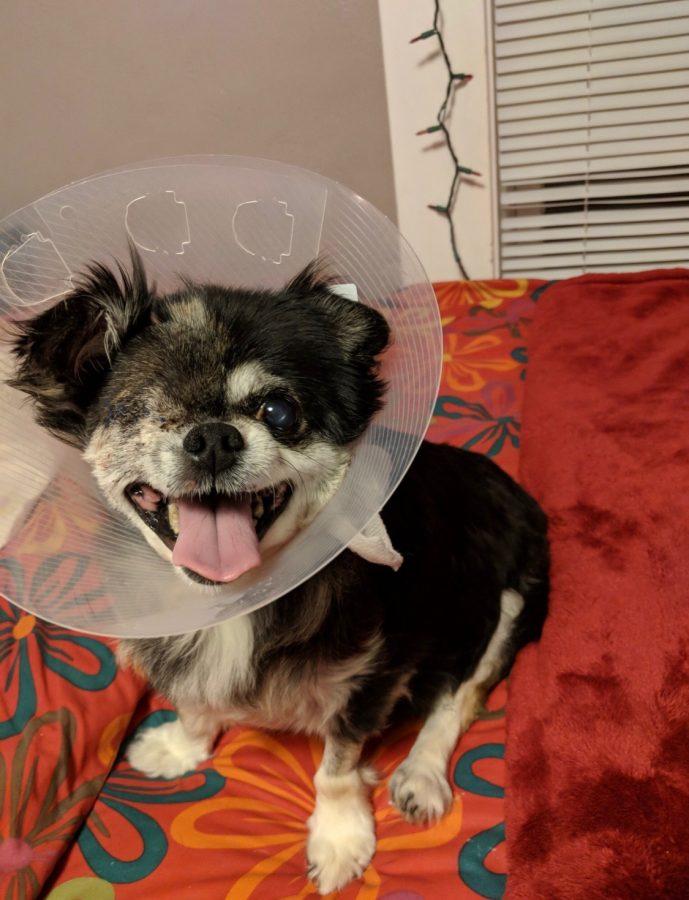 Riku after surgery